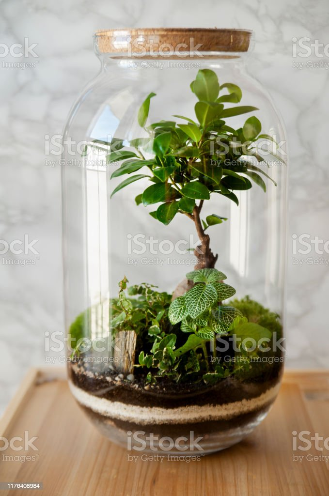 Glass Terrarium Vase With Bonsai Tree Small Decoration Plants In A Glass Bottlegarden Terrarium Bottle Forest In A Jar Stock Photo Download Image Now Istock
