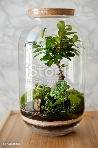 Terrarium jar with piece of forest with self ecosystem. Save the earth concept.