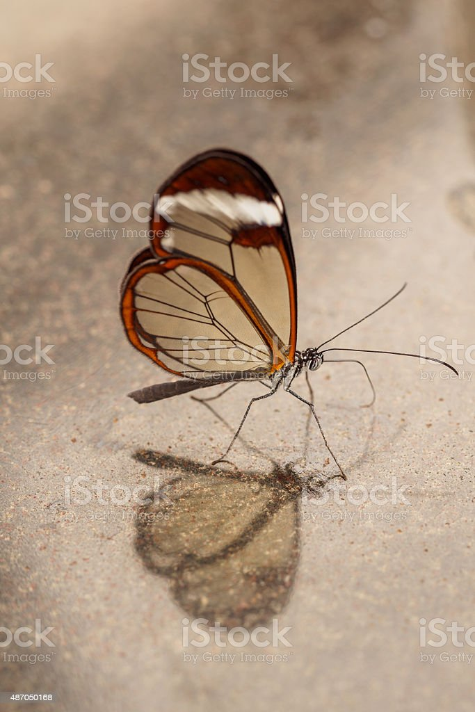 Glass wing vertical on marmer stock photo