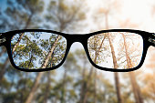 Some glasses focusing a beautiful forest