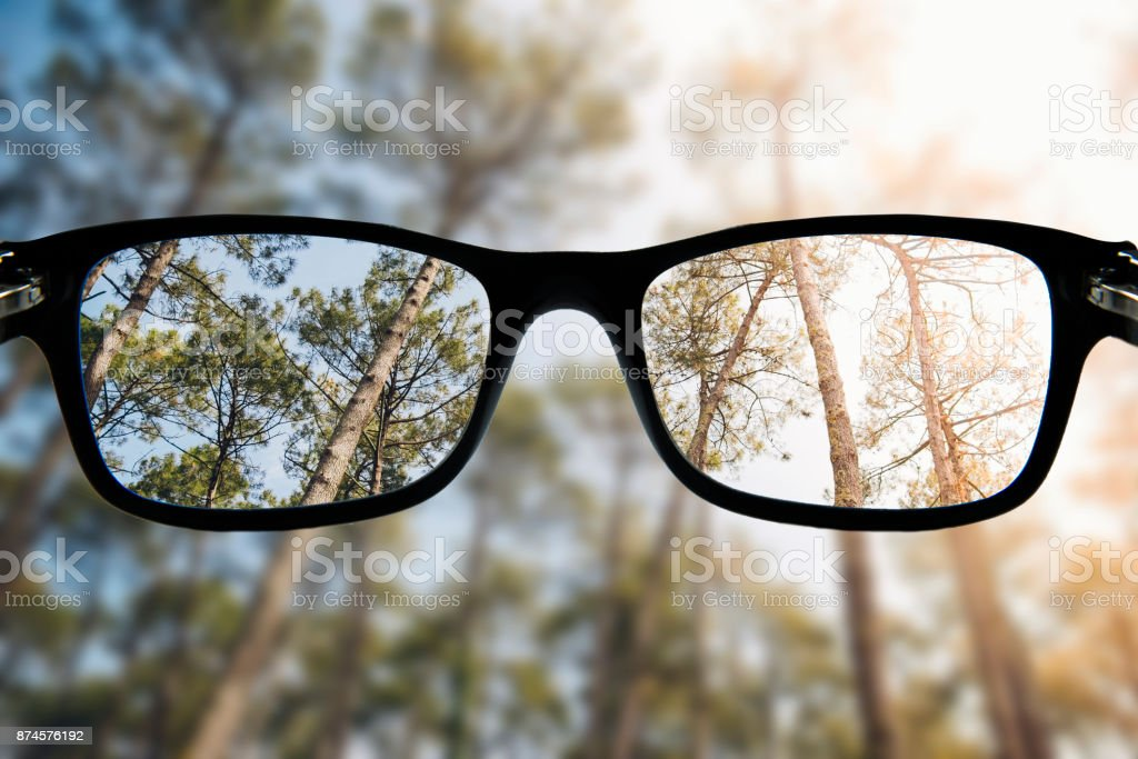 Glasses focusing a forest - foto stock