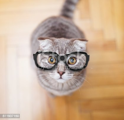 istock Glasses Scottish fold cat 511937150