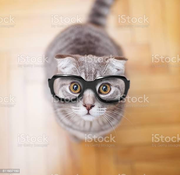 Glasses scottish fold cat picture id511937150?b=1&k=6&m=511937150&s=612x612&h=baey r9dsnrsormnz3caaumnxedosbbary13glx9mua=