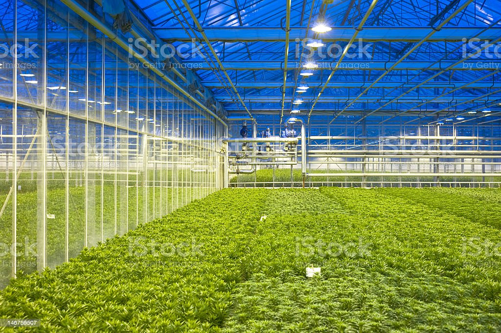 Glasshouse climate control stock photo