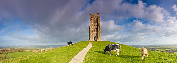 Glastonbury Tor Cattle grazing beside St. Michael's Tower, the iconic medieval edifice on top of Glastonbury Tor overlooking the town below, famous for its ley lines, alternative lifestyle and festival. Adobe RGB 1998 color profile. somerset england stock pictures, royalty-free photos & images