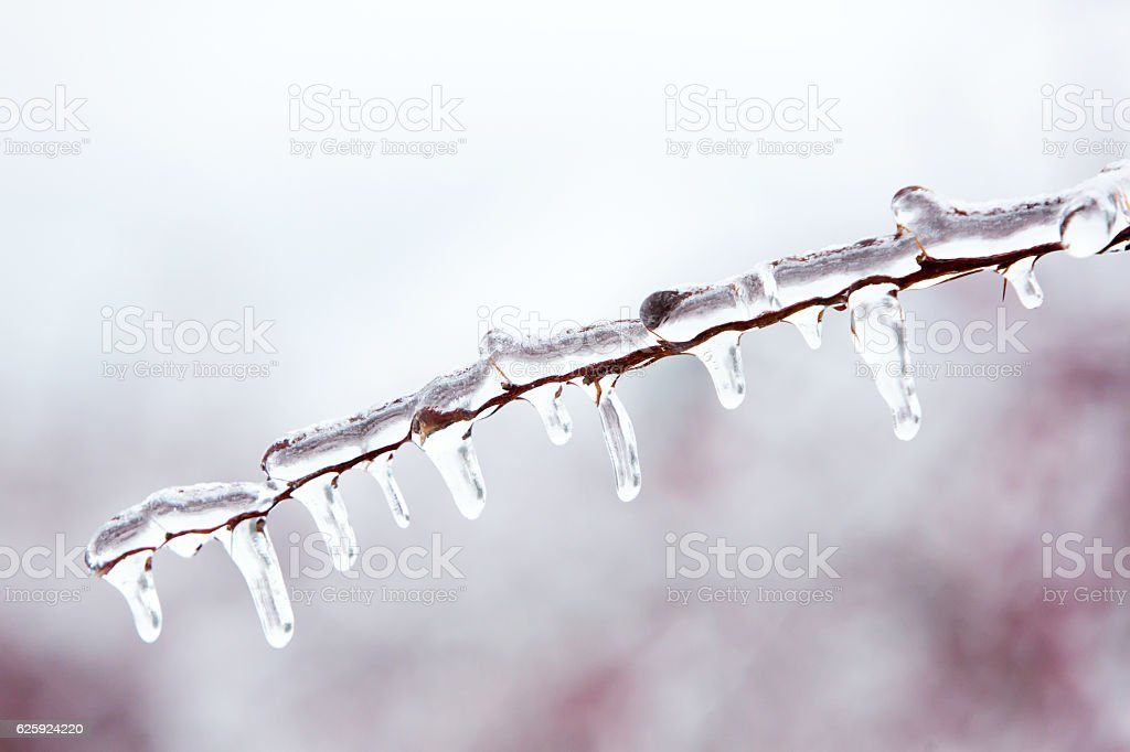 Glazed tree branch after winter ice storm stock photo