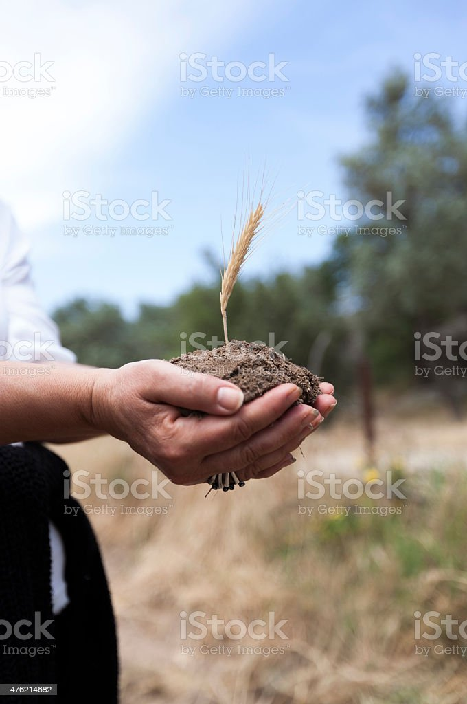 Glean in rich soil stock photo