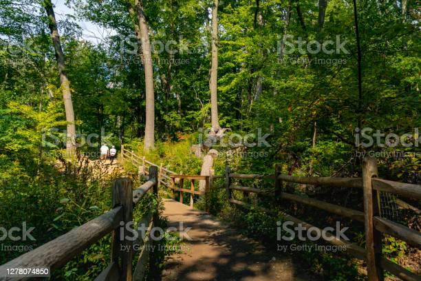 Photo of Glen Stewart Ravine Park and Tomlin's Cereek in Toronto, Canada