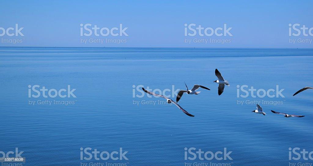 Glide stock photo