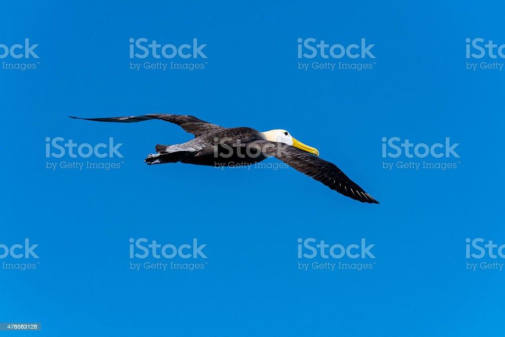 Gliding Along stock photo