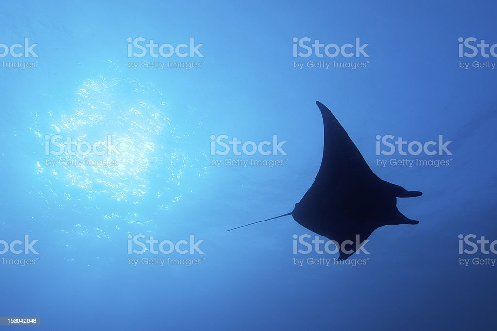 Gliding Silently stock photo