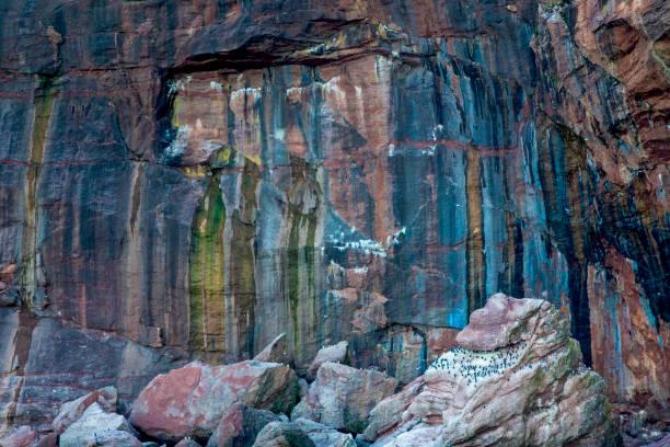 een kijkje bij één van bonaventure eiland zee kliffen waar de noordelijke genten en gemeenschappelijke zeekoet, ook wel genoemd zeekoet, onder andere soorten kunnen worden gezien. - northern gannet stockfoto's en -beelden