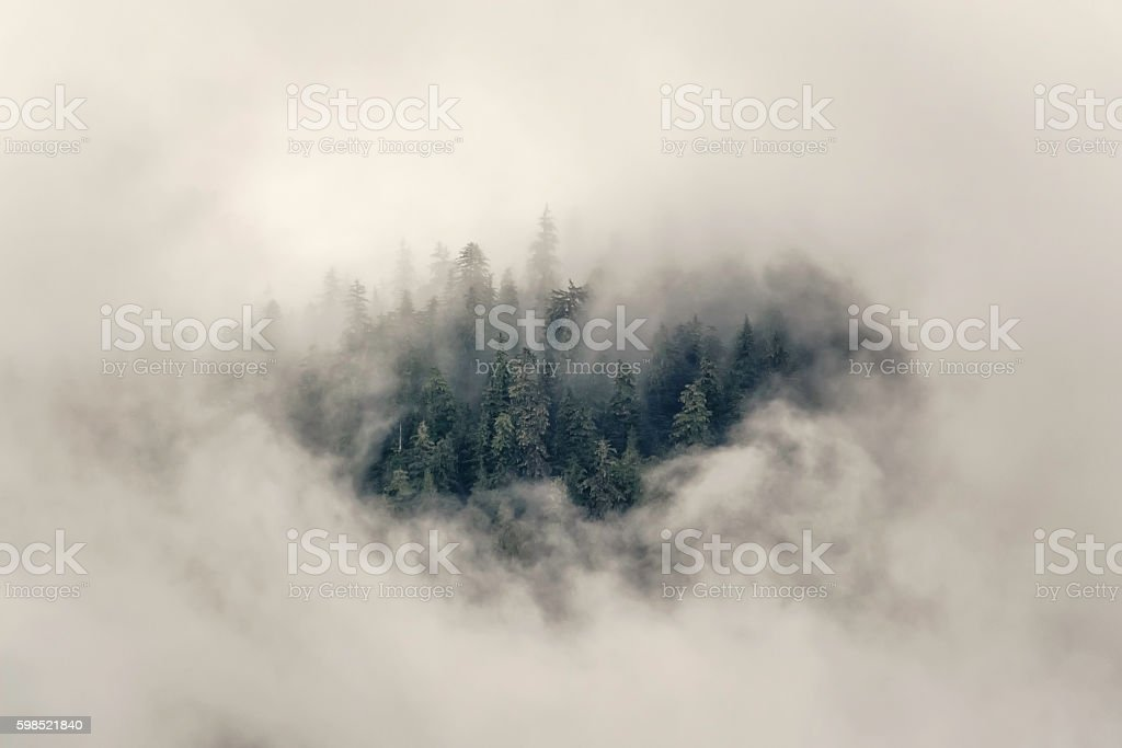 Tops of Sitka spruce trees seen through a gap in low clouds above a...