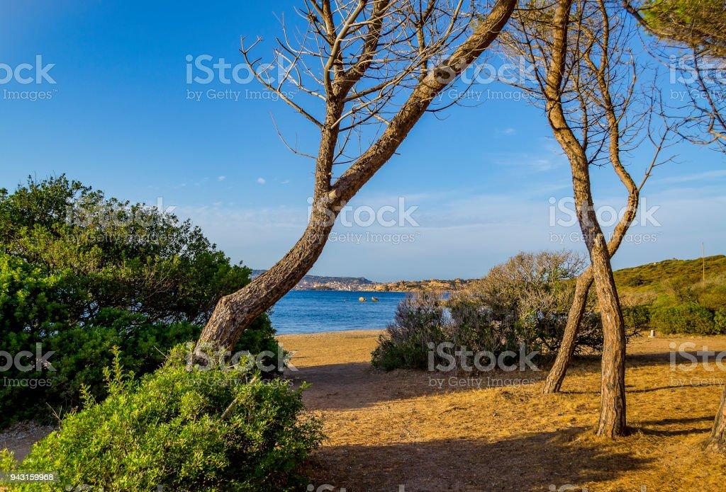 Glimpse of the sea in the pine forest in Palau (Olbia-Tempio, Sardinia, Italy). stock photo