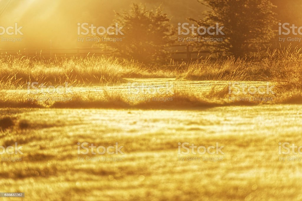 Glinting Grass Low Angle January Frosty Morning stock photo