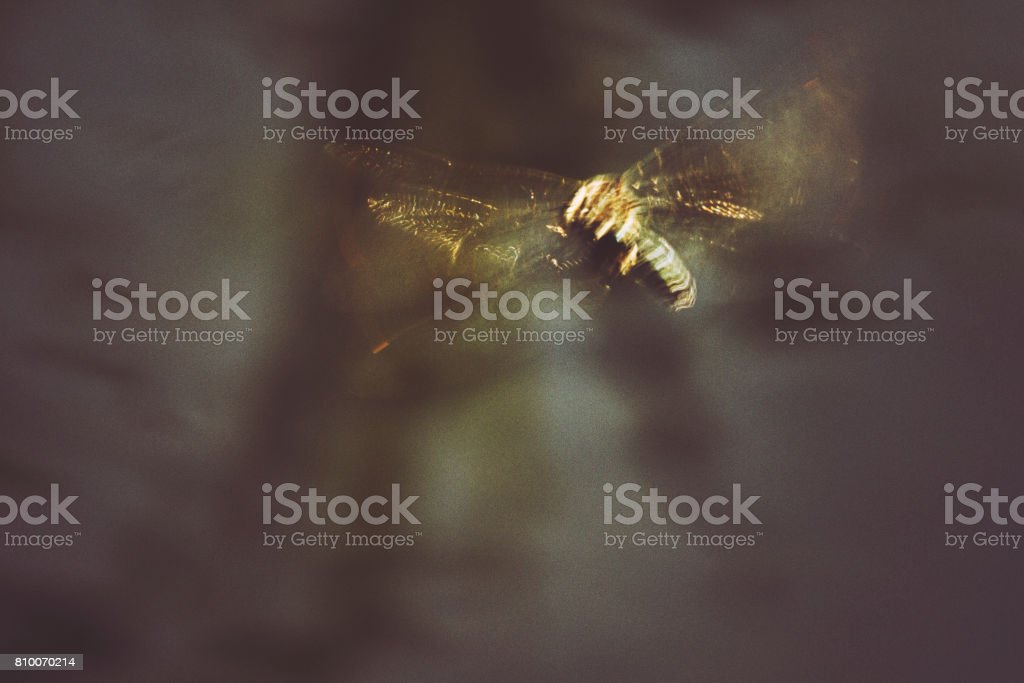 Glittering dragonfly in beautiful sunny dusk stock photo