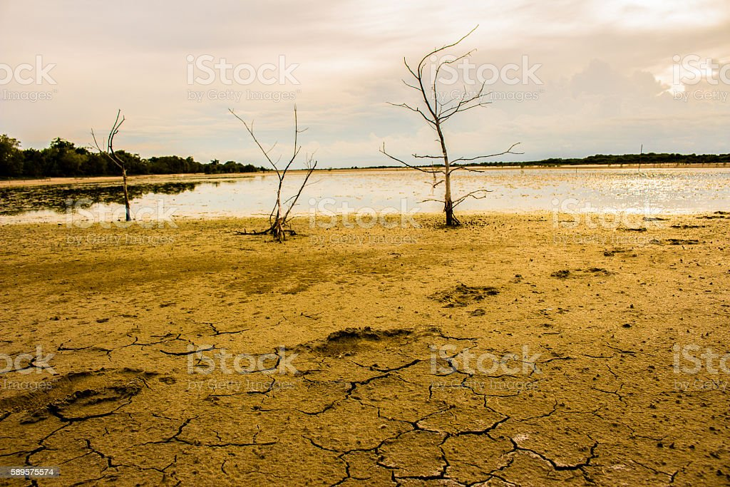 Global warming concept. Dead tree under ้hot sun, drought eart stock photo