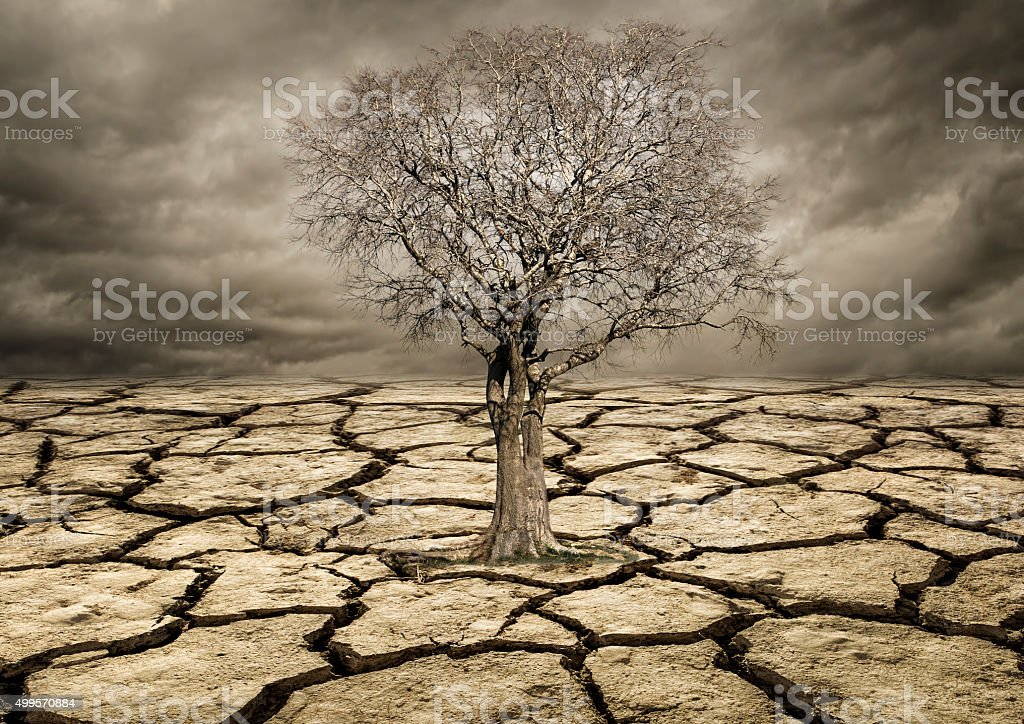 Global warming concept. Lonely  tree under dramatic Clouds stock photo