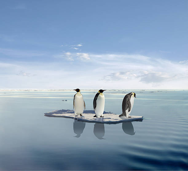 Global warming concept with three penguins on melting ice stock photo