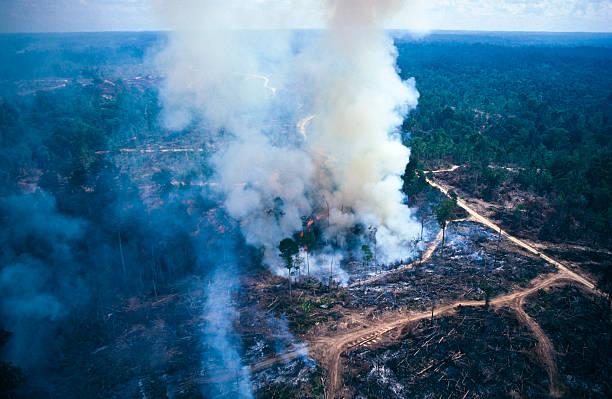 el calentamiento global. - deforestacion fotografías e imágenes de stock