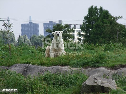 A polar bear sitting on a hill with buildings in the back.