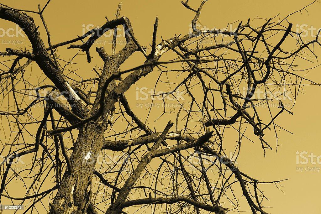 global warming tree royalty-free stock photo