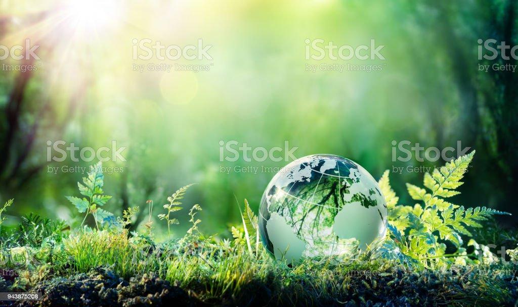 Globe sur mousse en forêt - environnement Concept photo libre de droits