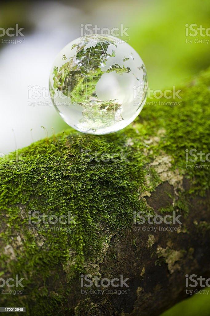 Globe on mossy tree royalty-free stock photo
