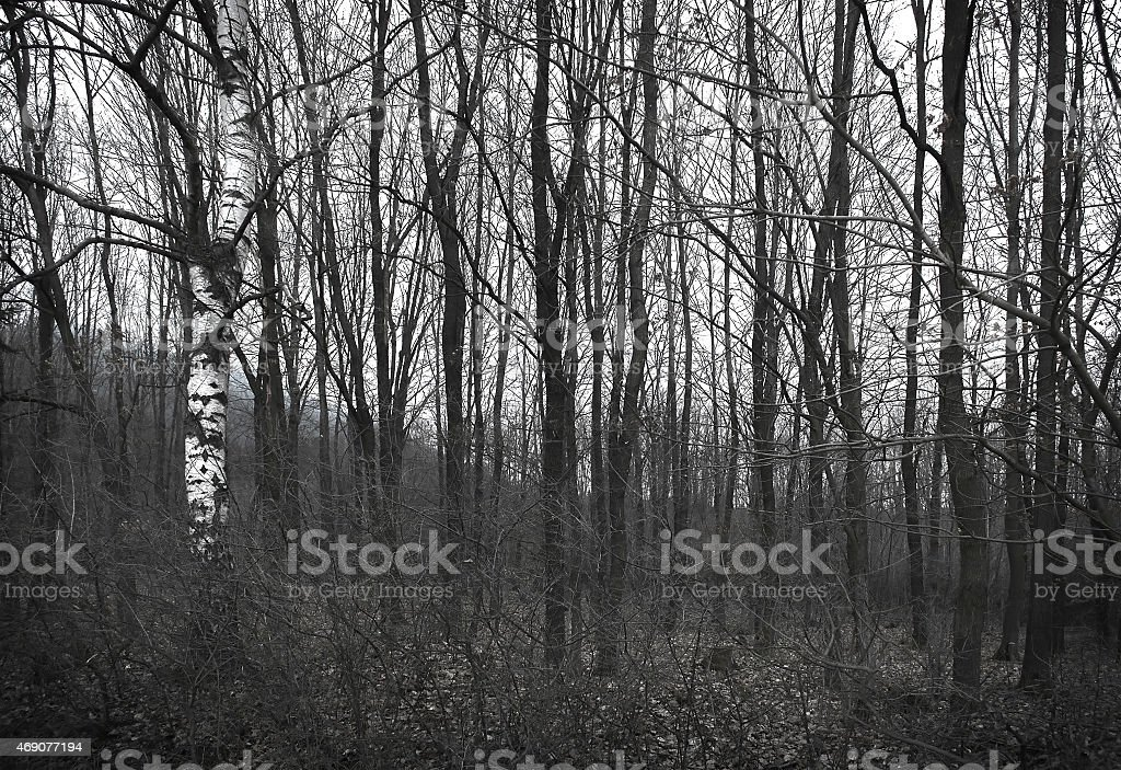 Gloomy forest in grayscale colours stock photo