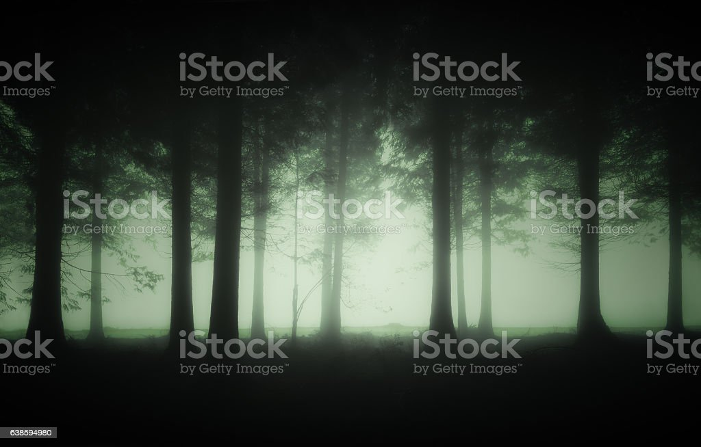 gloomy forest with fog stock photo