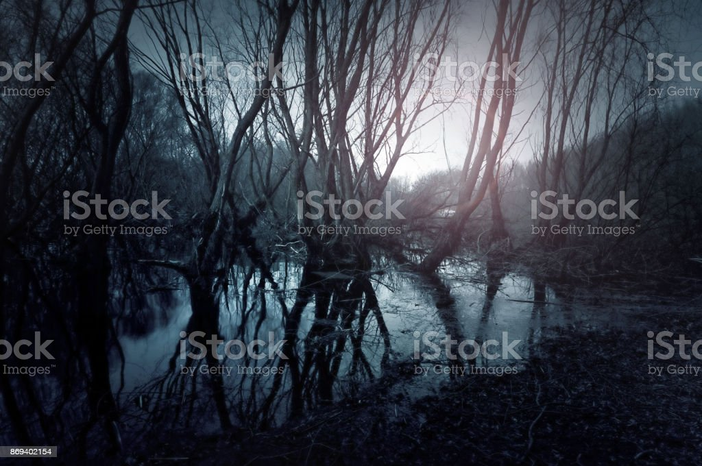 Gloomy swamp. Reflection of trees in water. Sunset landscape stock photo
