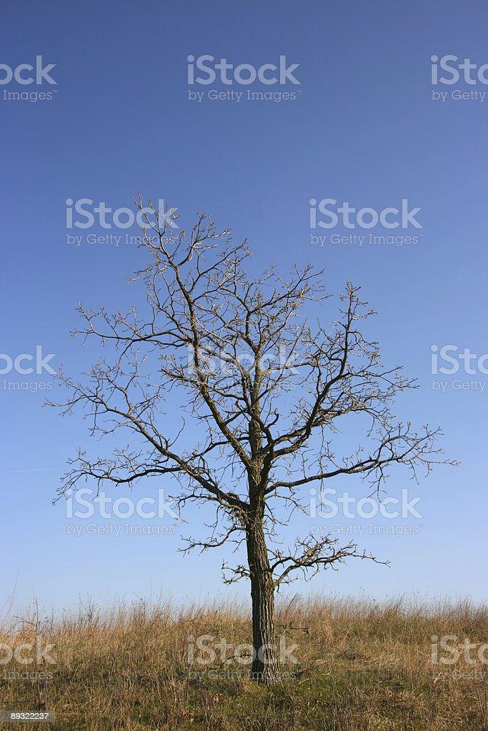 Gloomy tree, all alone royalty-free stock photo