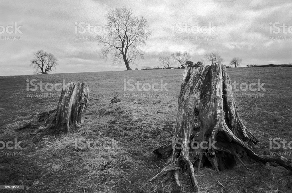 Gloomy trees in English moor royalty-free stock photo