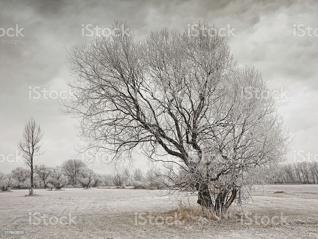 gloomy winter day royalty-free stock photo