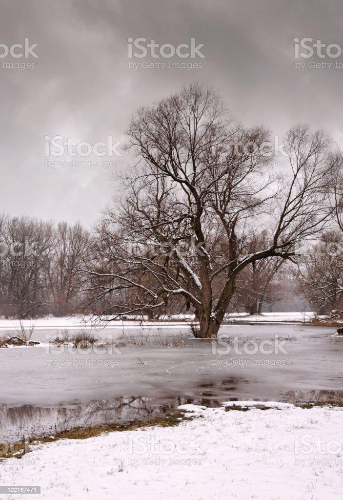 gloomy winter day royalty-free stock photo