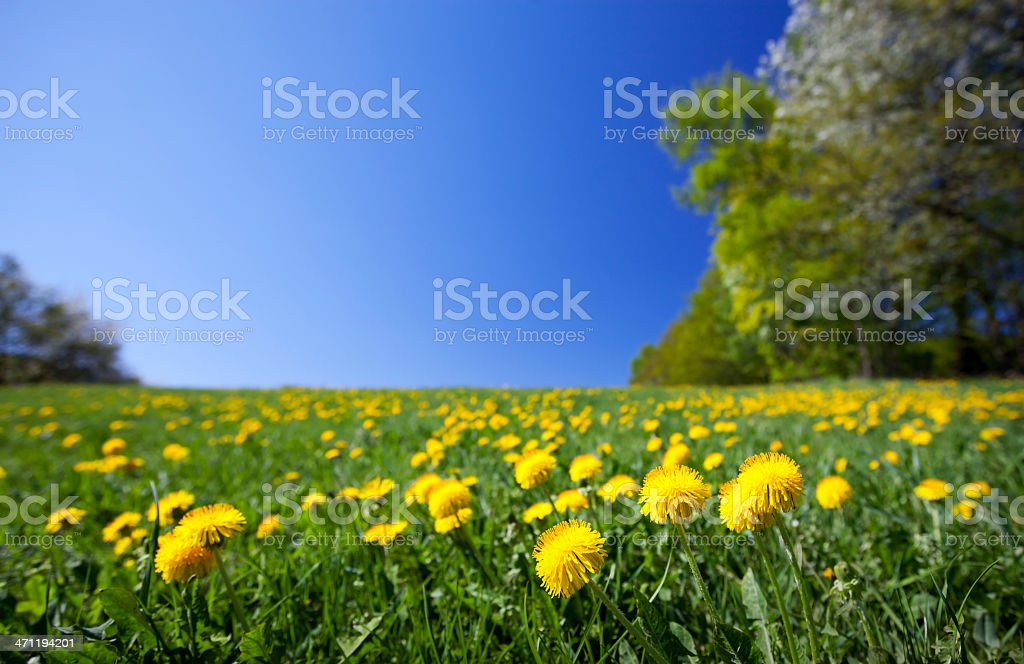 Glorious spring stock photo