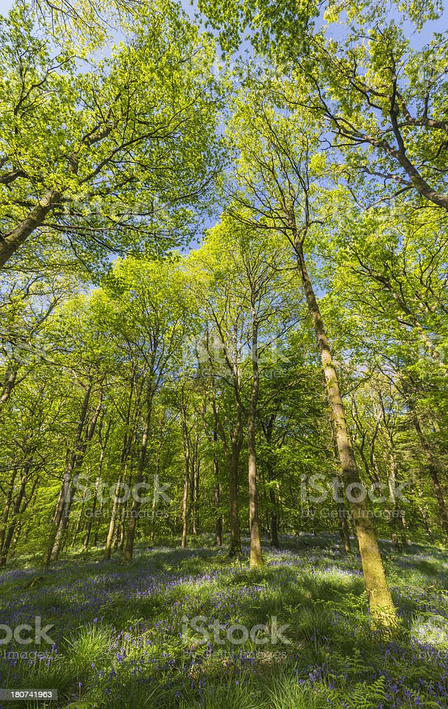 Glorious summer woodland vibrant green forest canopy banner royalty-free stock photo