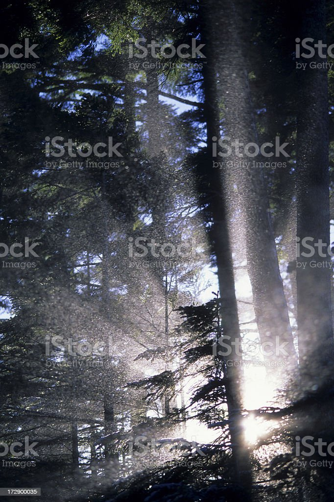 Glory forest royalty-free stock photo