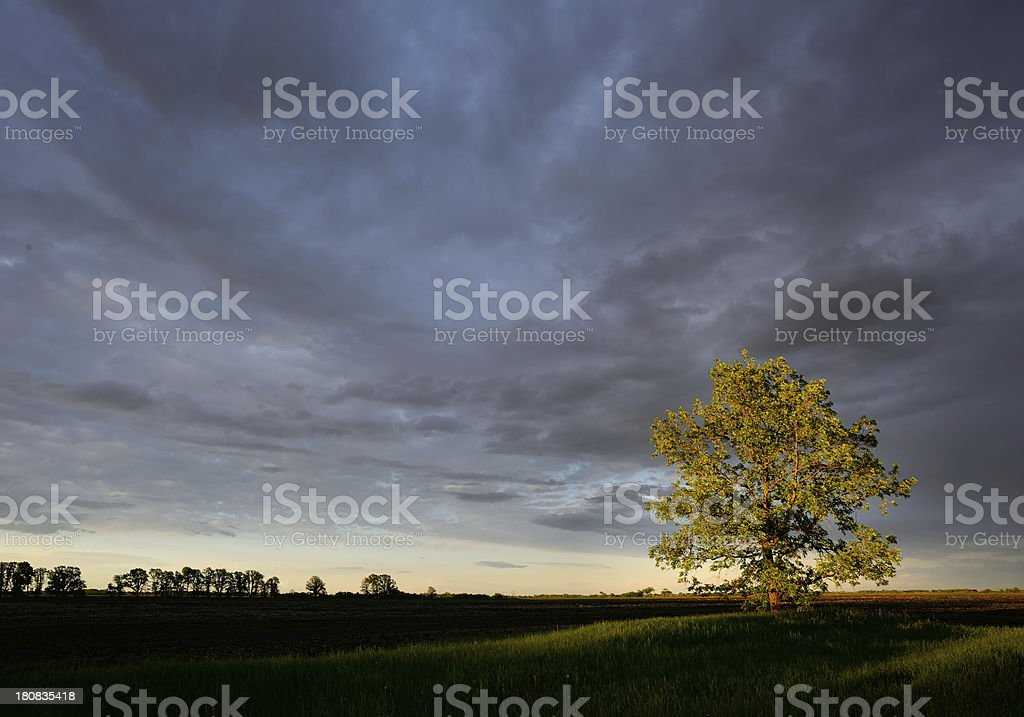 Glory of Nature royalty-free stock photo