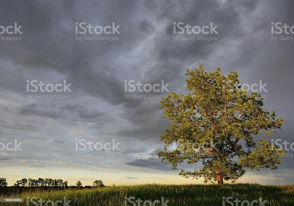 Glory of Nature royalty-free stock photo