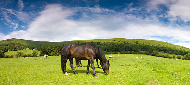 Glossy horse in picturesque pasture picture id94324441?b=1&k=6&m=94324441&s=612x612&w=0&h=do99buccxaqjkyahnnpbc 1ymsqoyg6v giyoxk 2kk=