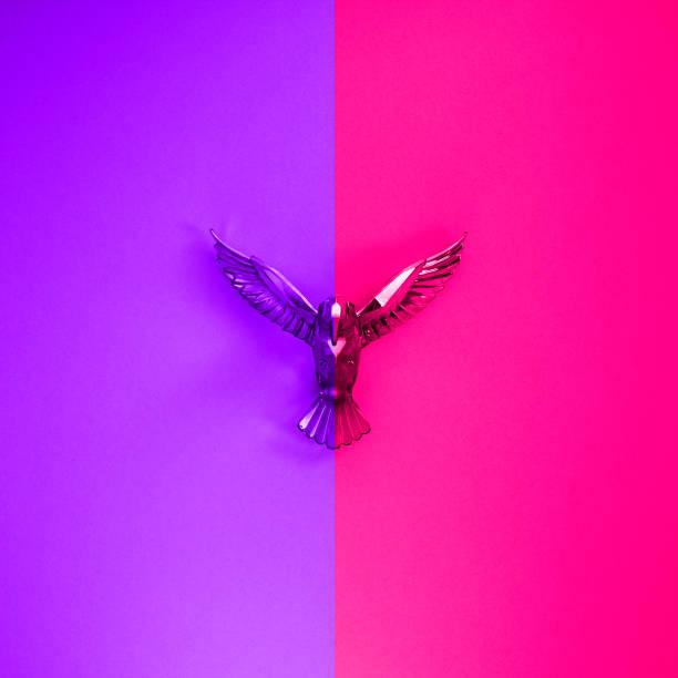hochglanzbringender summender vogel auf dem proton lila und plastisch rosa hintergrund. - schmuck engel stock-fotos und bilder