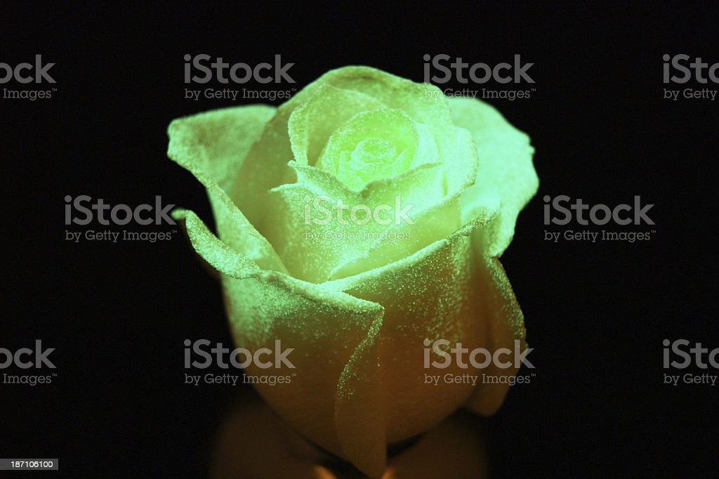 Glow in the dark rose royalty-free stock photo