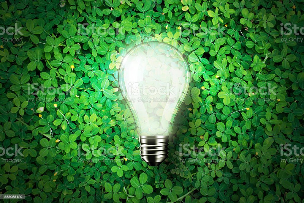 Glow light bulb on green grass background, concept idea stock photo