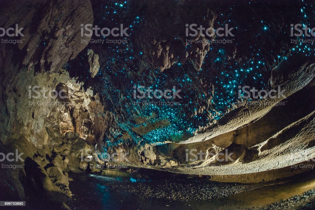 Glow worms shine brightly in Waipu Caves, New Zealand stock photo
