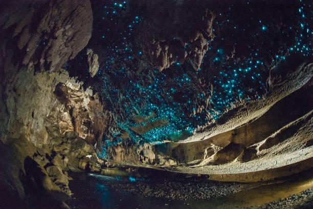 gloed wormen glans helder in waipu grotten, nieuw-zeeland - grot stockfoto's en -beelden
