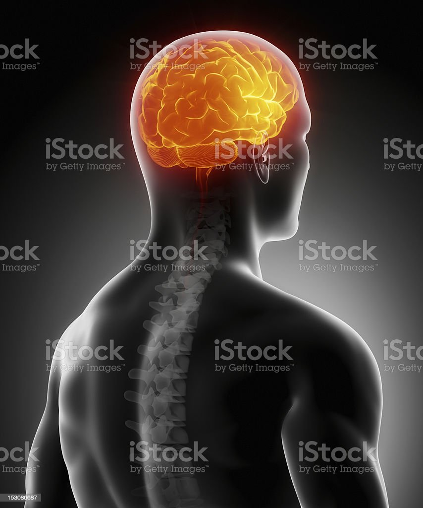 Glowing brain with human spine anatomy stock photo