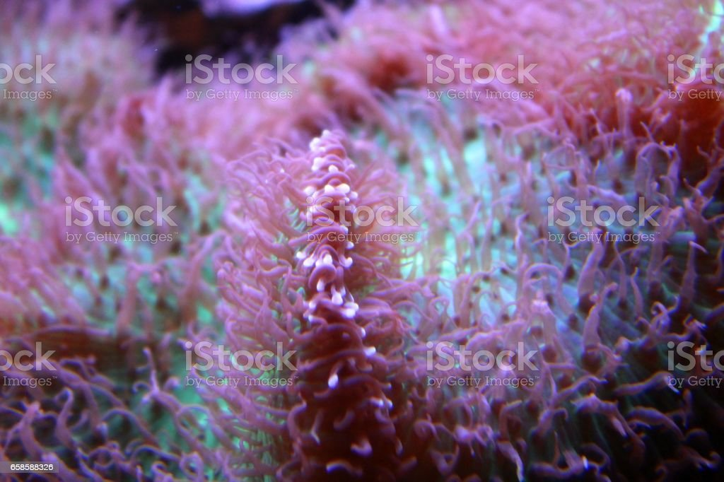 Glowing Coral Reefs with Flourescent Colors stock photo