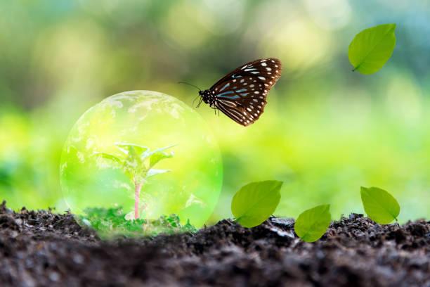 glödande jordglob på jord med fjäril i naturen.   världs miljö och spara miljö. earth bild från nasa. - biologisk mångfald bildbanksfoton och bilder
