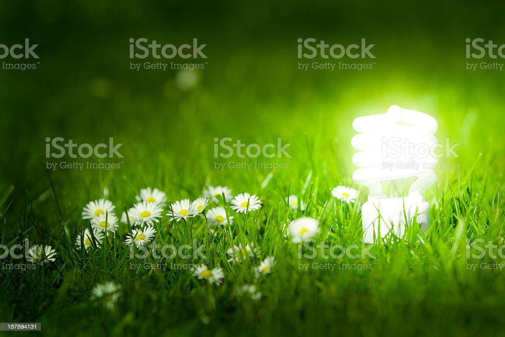 Glowing energy saving bulb in green grass. stock photo